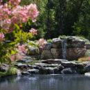 Pond-and-waterfall,-hydrangea-tree